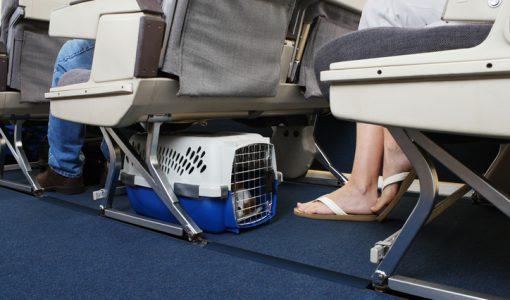 Hundar är välkomna på flyg.