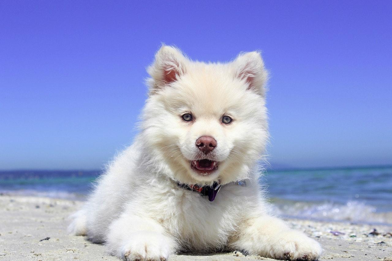 Fin hund på stranden