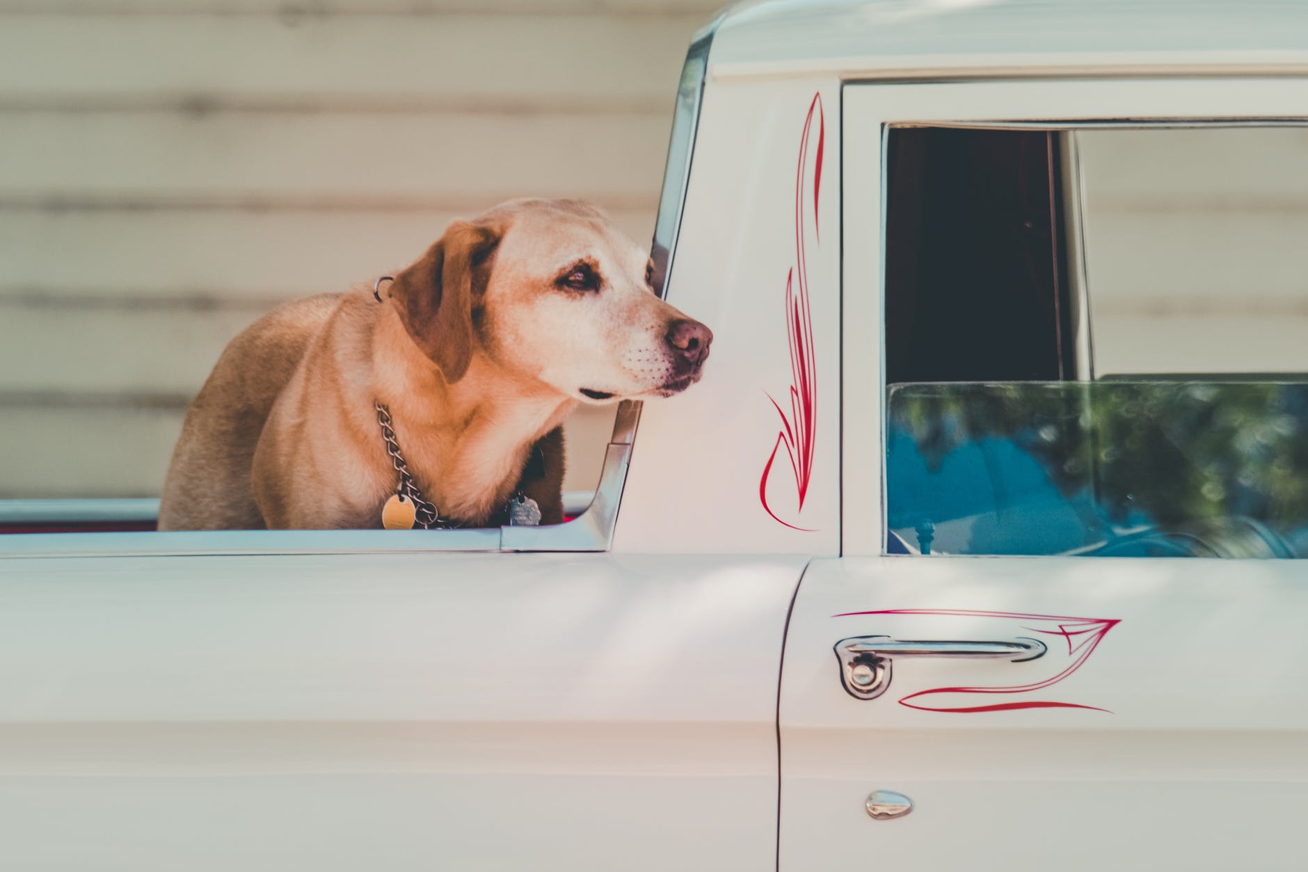 En hund på ett bilflak